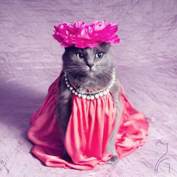 El gato con mas glamour de Instagram (6)