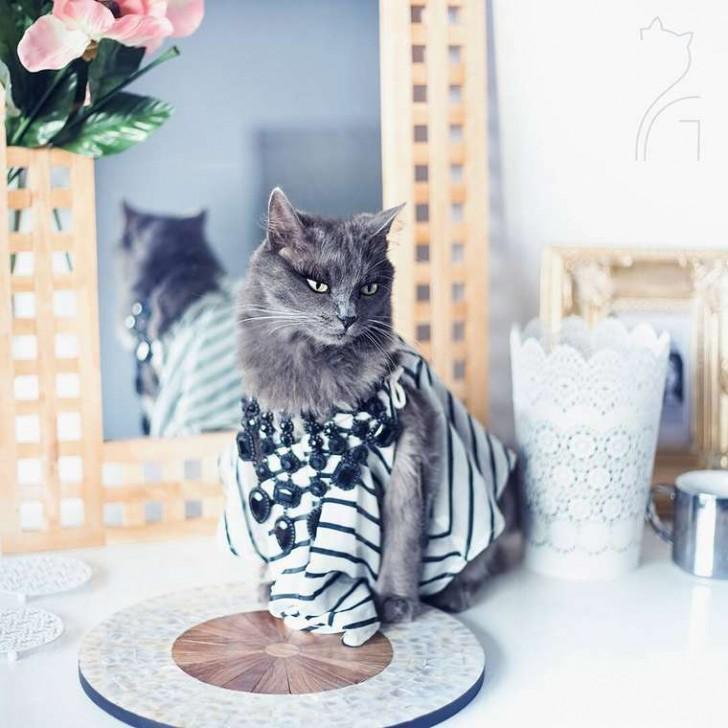 El gato con mas glamour de Instagram (8)