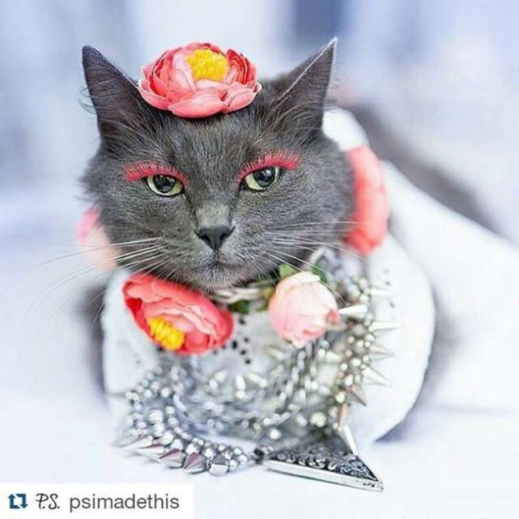 El gato con mas glamour de Instagram (9)