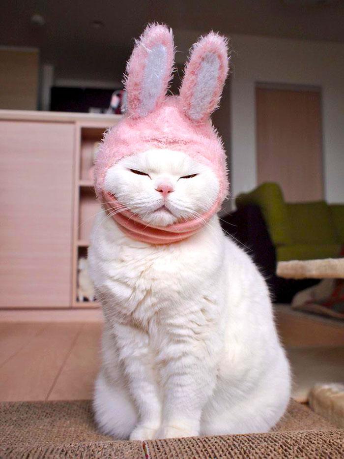 el-gato-mas-relajado-de-internet-11