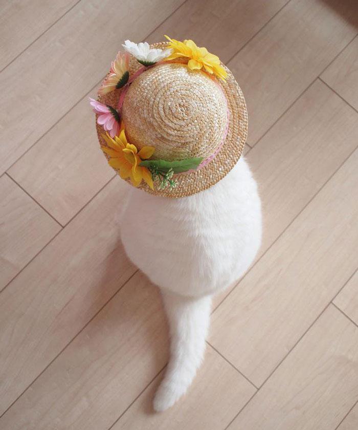 el-gato-mas-relajado-de-internet-12