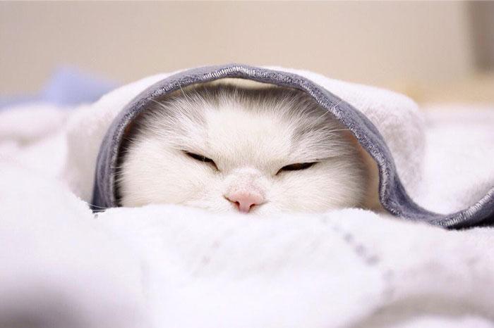 Este dulce gatito blanco se muestra muy relajado en todas sus fotos. Desde en la que aparece con unas bonitas orejitas rosas de conejo hasta aquella en la que lleva un sombrero de flores. Se trata de una mascota de 17 años que ha vivido una vida plena, pero que actualmente está enferma y por eso se suele mostrar tan relajada en las fotos. Pero, precisamente por ello, y gracias a sus bonitas y tranquilas fotos es uno de los animales más famosos de Japón, con millones de seguidores en las redes sociales.