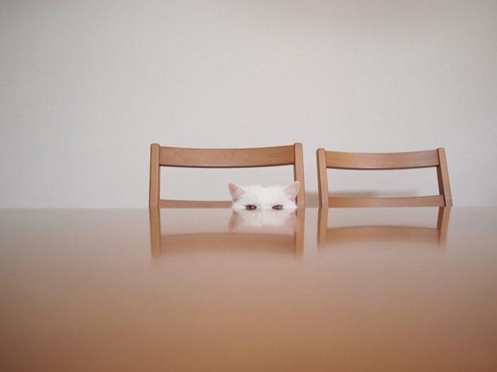 el-gato-mas-relajado-de-internet-15