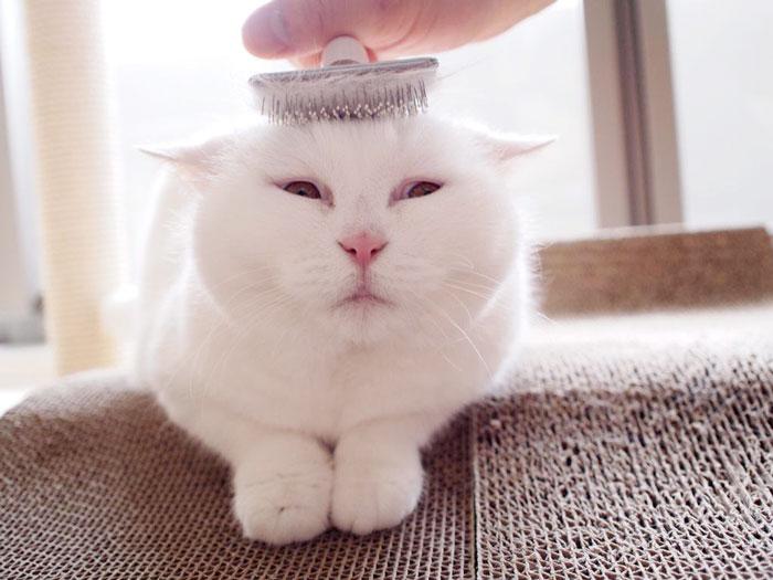 el-gato-mas-relajado-de-internet-16