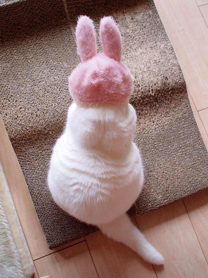 el-gato-mas-relajado-de-internet-17