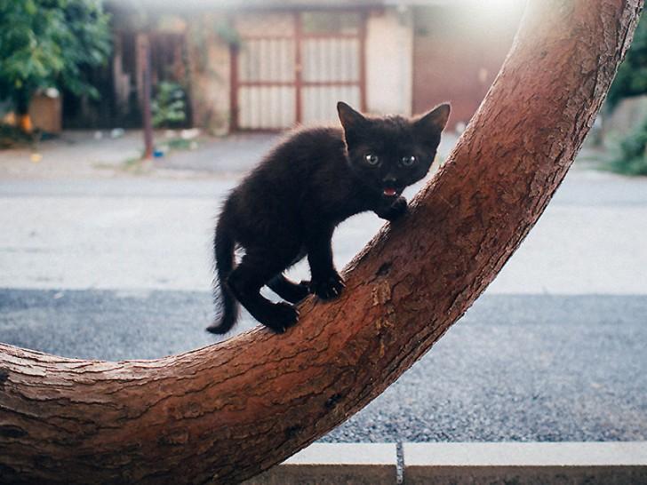 Fotografias bonitas de gatos callejeros (13)