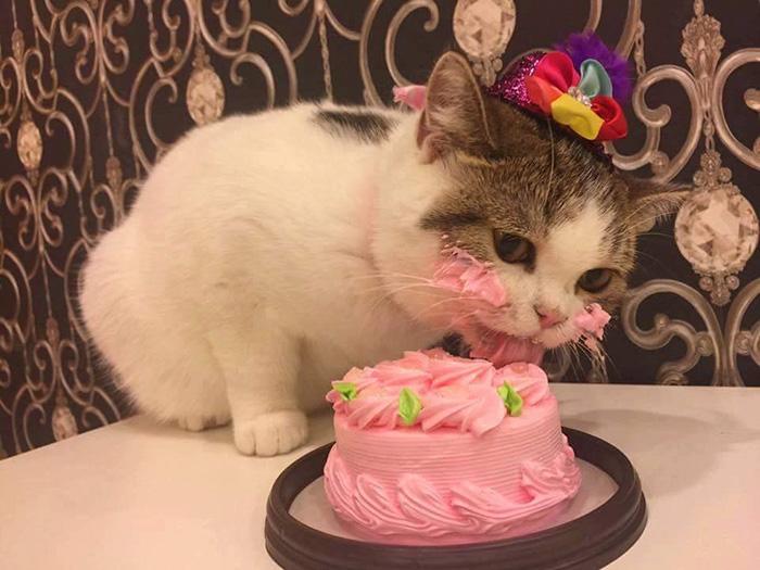 Gatito comiendose un pastel en su cumpleanos (1)