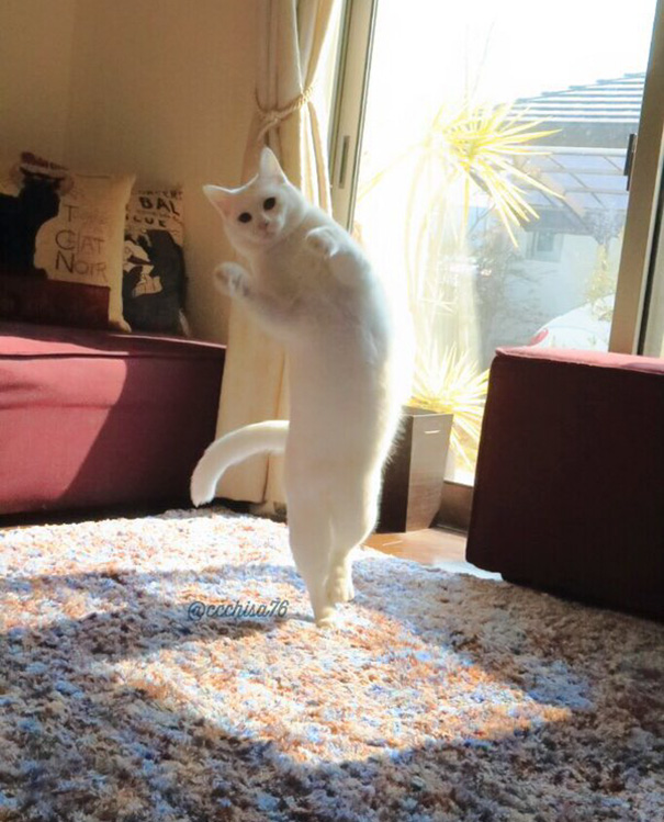 Gato bailando ballet (7)