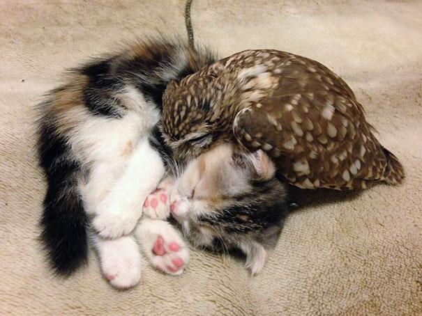 Gato y buho se hacen amigos inseparables (1)