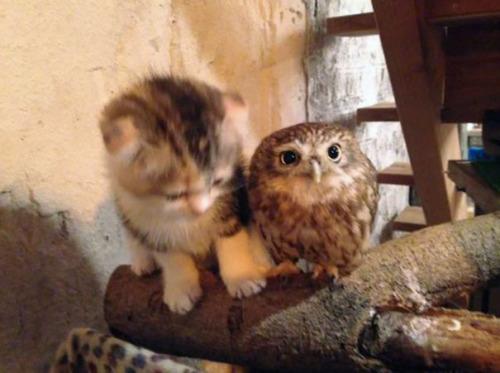 Gato y buho se hacen amigos inseparables (3)