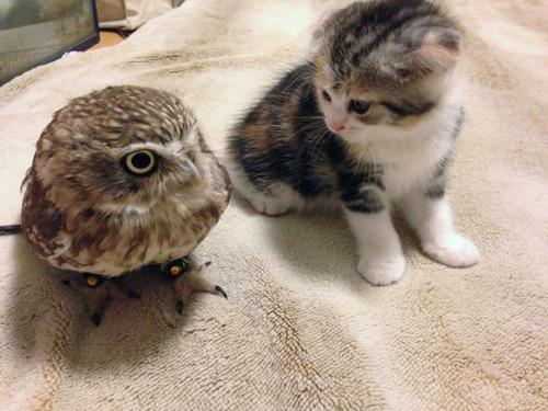Gato y buho se hacen amigos inseparables (4)