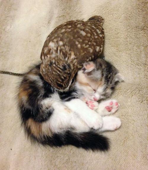 Gato y buho se hacen amigos inseparables (6)