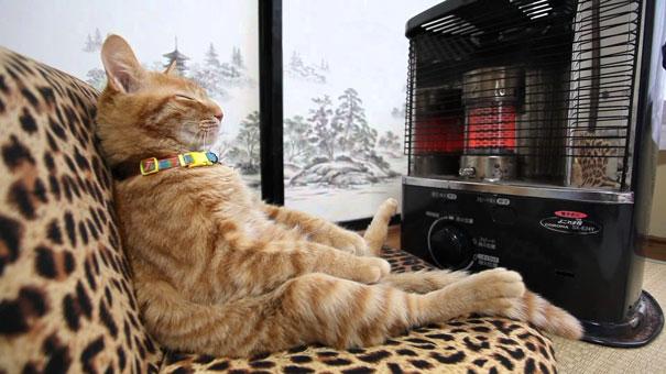 Gatos que buscan calorcito en cualquier sitio (13)