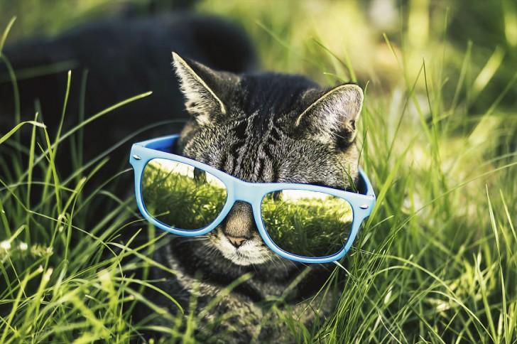 gatos-que-parecen-personas-1
