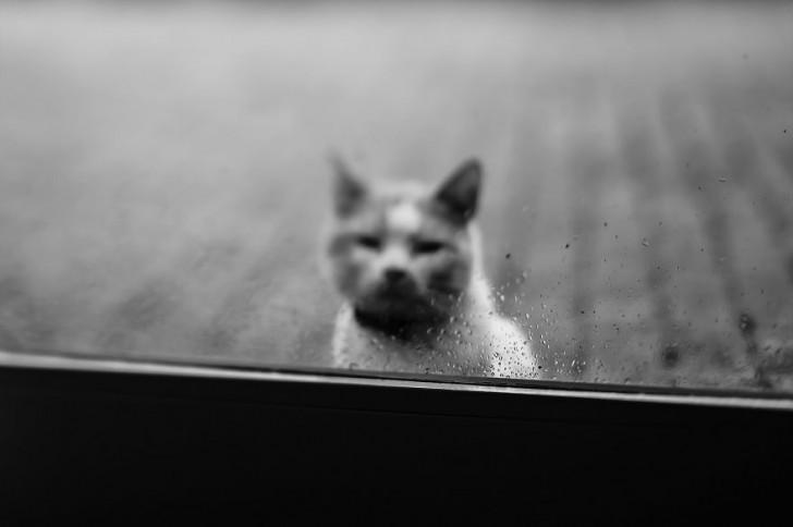 gatos-que-parecen-personas-12