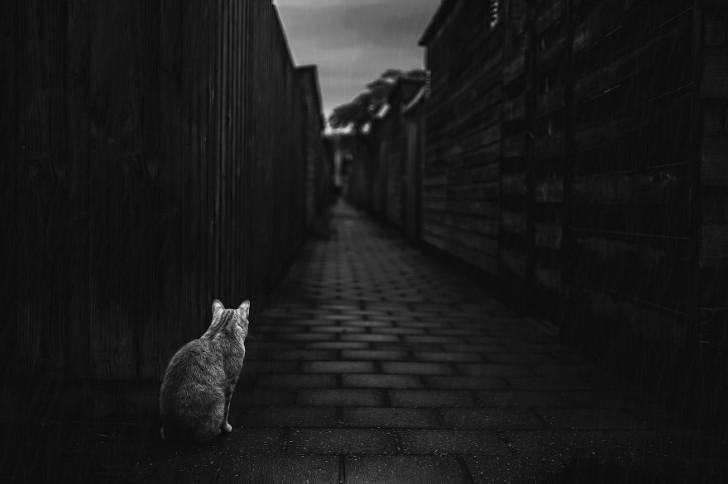 gatos-que-parecen-personas-13