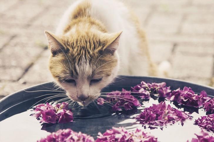 gatos-que-parecen-personas-16