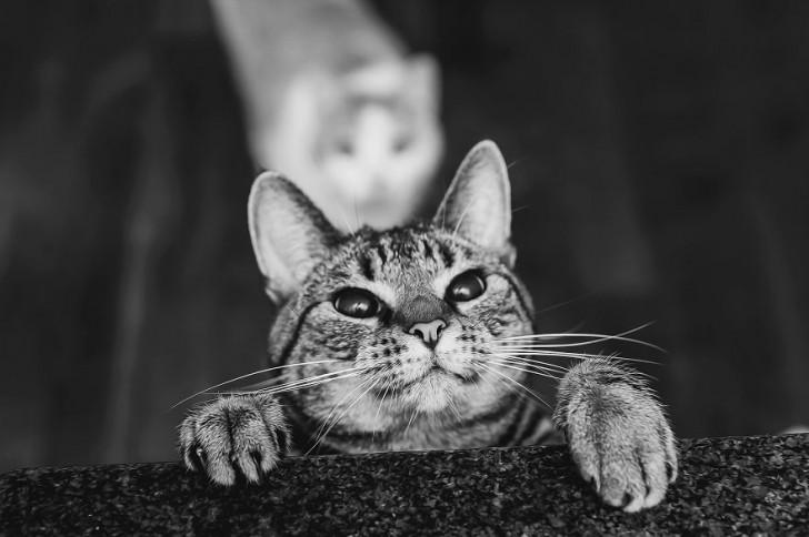 gatos-que-parecen-personas-2