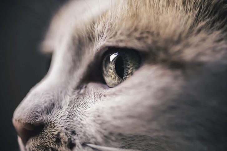 gatos-que-parecen-personas-3