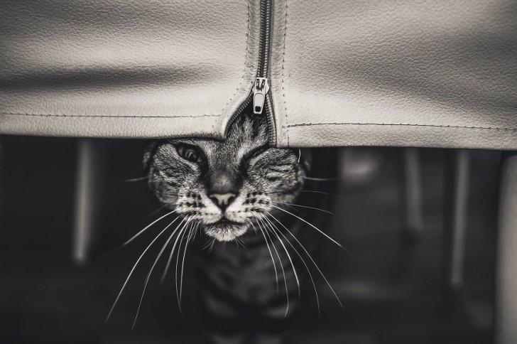 gatos-que-parecen-personas-4