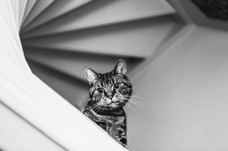 gatos-que-parecen-personas-6