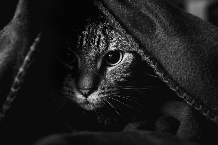 gatos-que-parecen-personas-7