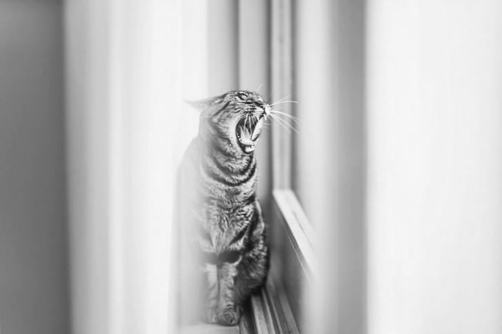 gatos-que-parecen-personas-8