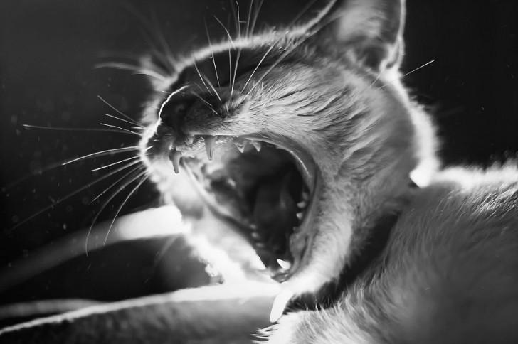 gatos-que-parecen-personas-9