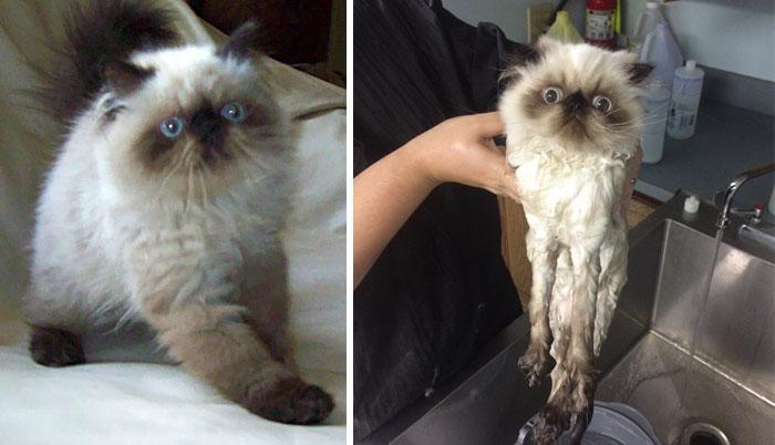 Gatos y perros antes y despues del bano (13)