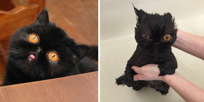 Gatos y perros antes y despues del bano (14)