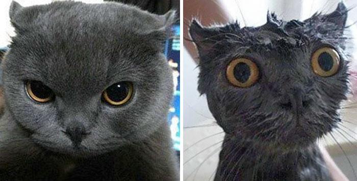Gatos y perros antes y despues del bano (4)