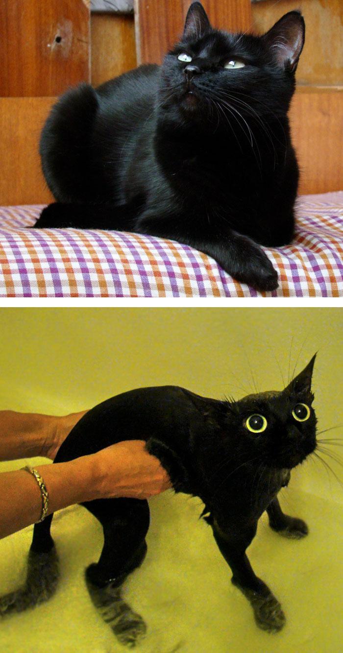 Gatos y perros antes y despues del bano (9)