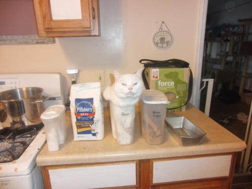 Gatos y perros que necesitan ayuda inmediata (4)