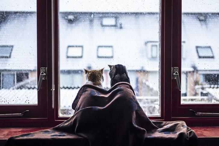 Una pareja de gatos muy fotogenica (3)