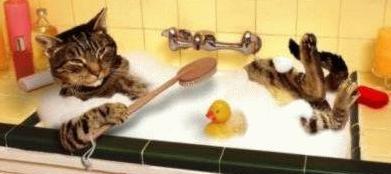 Quieres saber como cuidar a tu gato entra taringa - Banar gatos ...