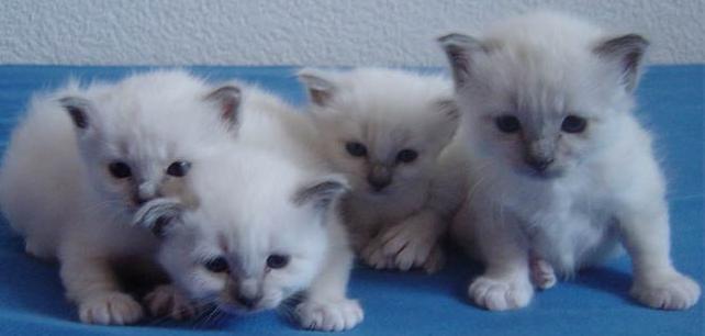¿Quieres saber como cuidar a tu gato? Entra!!!!