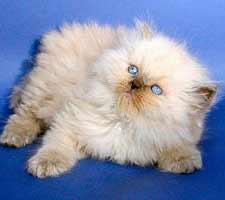 kitty_nat