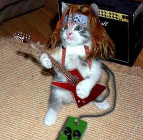 Caturday! Imagenes-gatos-graciosas