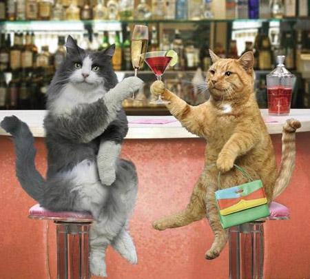 http://www.mundogatos.com/images/imagenes-graciosas-gatos-p.jpg